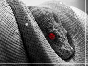 snake-300x225